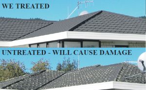 Davey Painters Roof Care